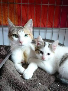 lyon chat adoption association