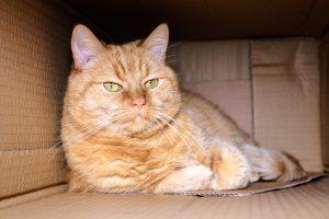 QUIZ : Êtes-vous incollable sur les chats ?