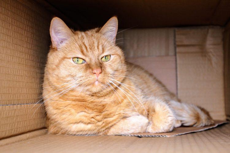 Conseil déménagement chat