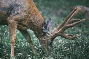Qui sont les victimes de la sixième extinction de masse des animaux ?