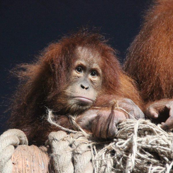 sixième extinction de masse des animaux
