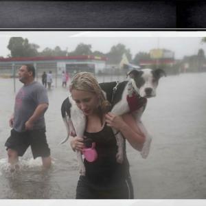 Ouragan Harvey : les bénévoles s'affairent afin de sauver les animaux