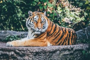 12 espèces animales qui seront bientôt rayées de la carte