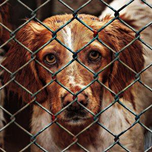Comment savoir si un chien a été maltraité par le passé ?