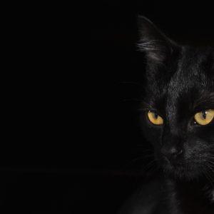 Pourquoi dit-on que les chats noirs portent malheur ?