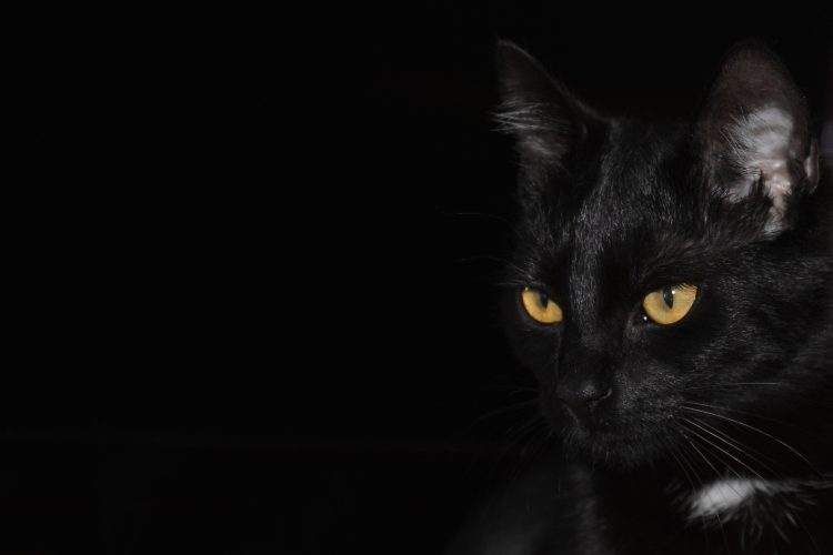pourquoi les chats noirs portent malheur