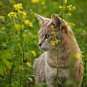 EN IMAGES : 15 plantes toxiques pour vos chiens et vos chats