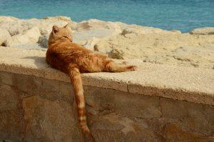Comment préserver son chat en période de canicule?