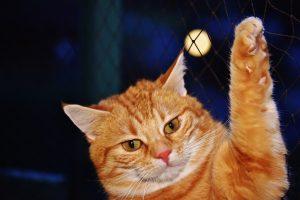 11 choses insolites à connaître sur les chats