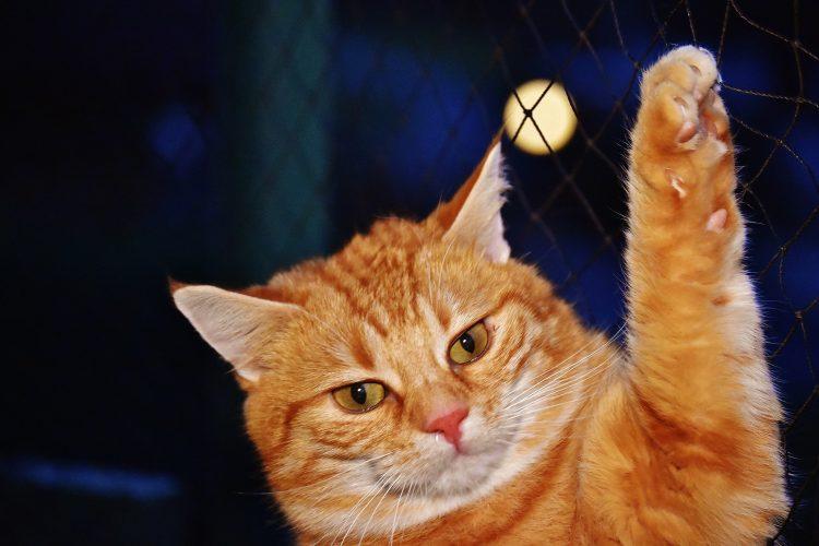 11 choses insolites à savoir sur les chats