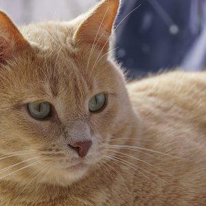 Obésité féline : ce qu'il faut savoir sur la prise de poids de son chat