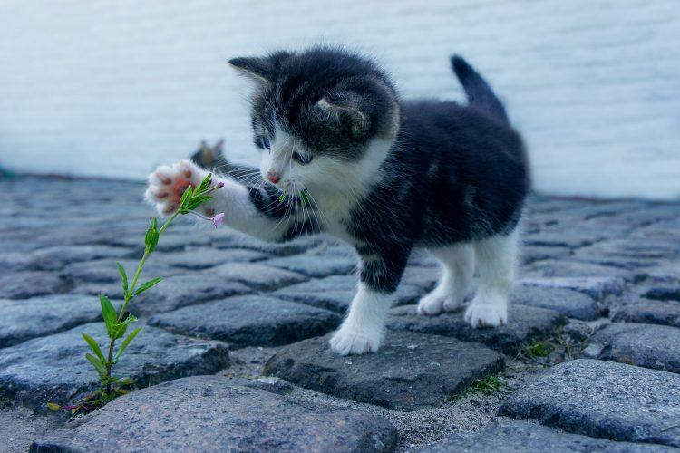 Comment bien s'occuper d'un chaton orphelin?
