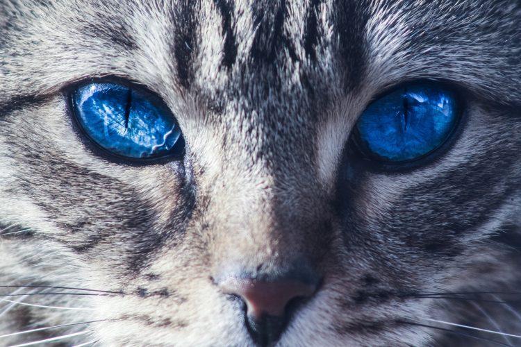 typhus maladie du chat