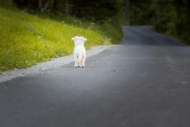Donner son animal contre bons soins, un abandon à risque