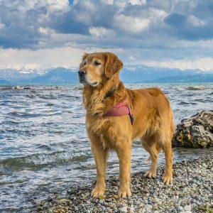 Emmener son chien à la plage : tout ce que vous devez savoir