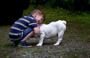 EN IMAGES : 7 races de chiens qui sont connues pour leur gentillesse