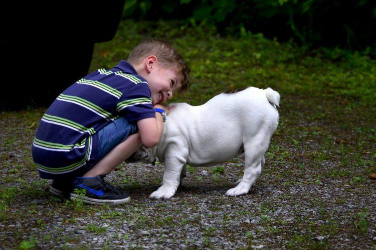 race de chiens réputés pour leur gentillesse