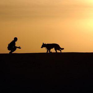 7 activités à faire avec son chien avant l'hiver