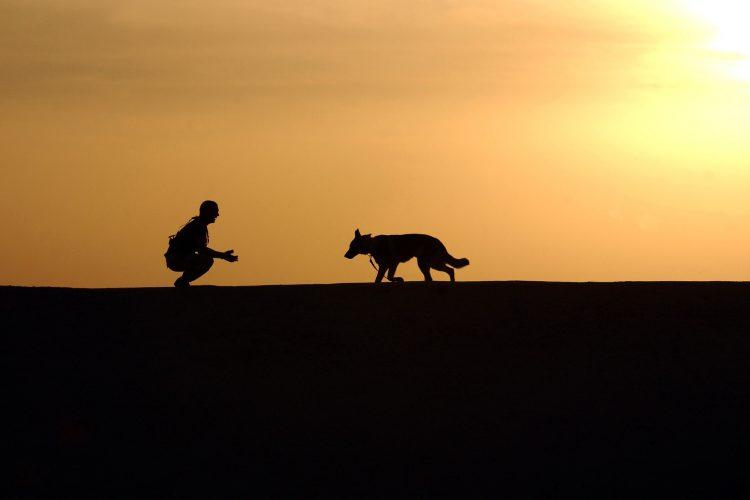 activités à faire avec son chien avant l'hiver