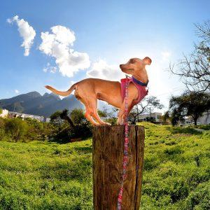 Jardin : 5 choses dangereuses pour votre animal