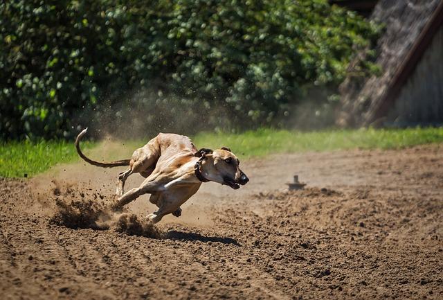 15 choses insolites à connaître sur les chiens