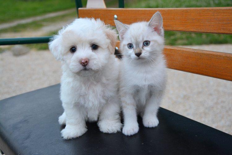 chien qui s'entend avec les chats