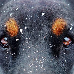 QUIZ : Connaissez-vous toutes les races de chiens ?