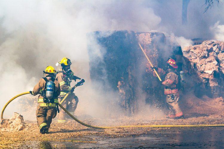 Incendie : ce qu'il faut savoir pour mettre vos animaux en sécurité