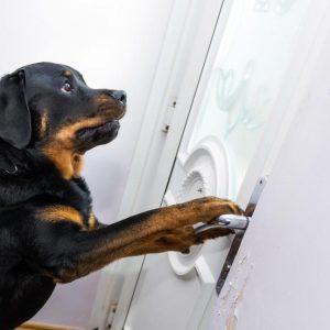 Ce chien a sauvé son maître en ouvrant la porte aux ambulanciers