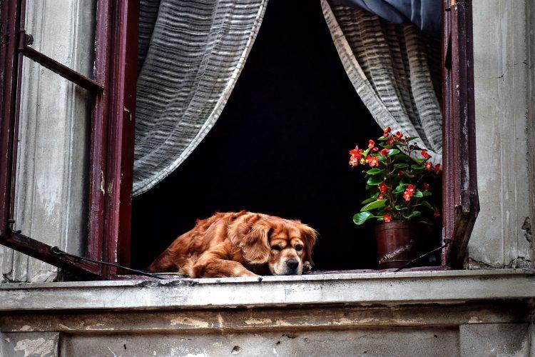 Les chiens ont-ils la notion du temps