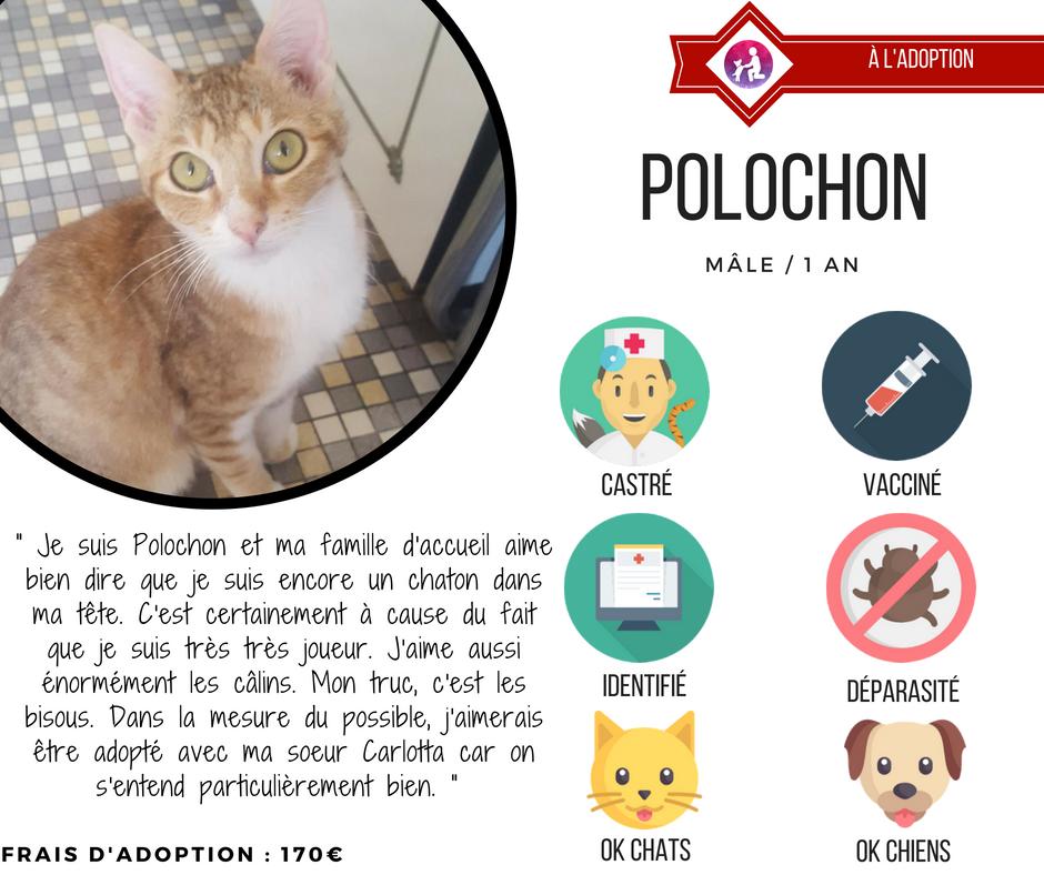 chat adoption association lyon