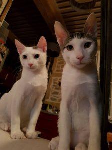 chat à l'adoption lyon sans croquettes fixes