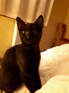 lyon chat à l'adoption association sans croquettes fixes