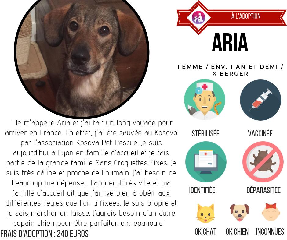 chiens à l'adoption lyon association