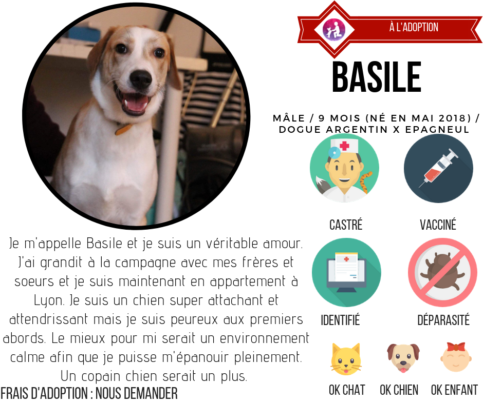 chien à l'adoption association LYON