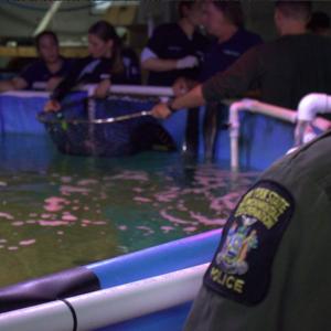 La police trouve une piscine de requins dans une cave