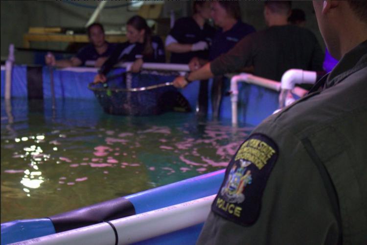 requin trouvés dans une piscine