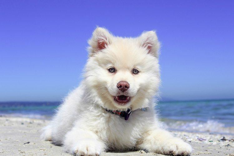 questions à se poser avant d'adopter un chien