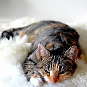 5 raisons de dormir avec son chat plutôt que tout seul