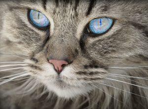 6 choses à savoir sur les yeux des chats
