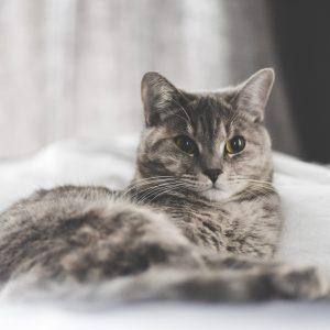 Éducation : Apprendre à dire NON à son chat