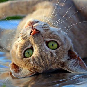 La ronronthérapie : nos chats et leurs vertus thérapeutiques
