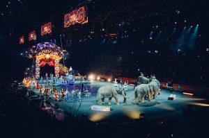 Cirque : ils veulent continuer à utiliser des animaux sauvages
