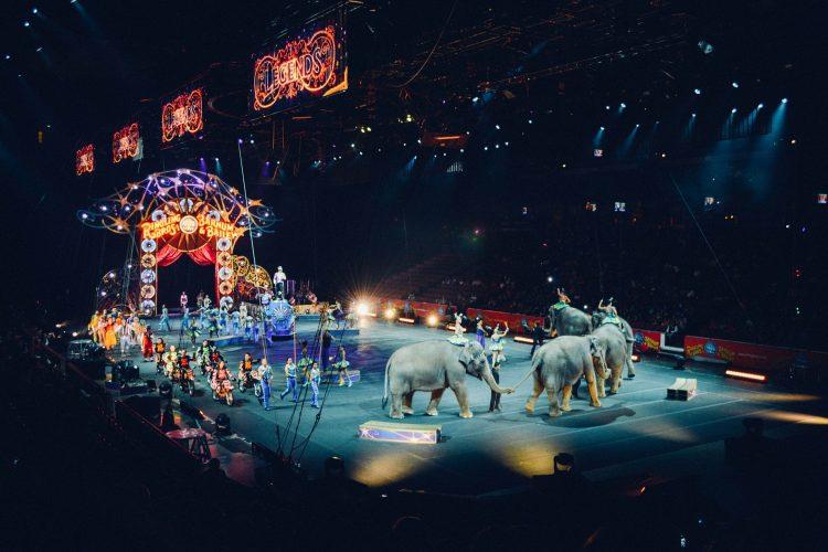 cirque et animaux sauvage