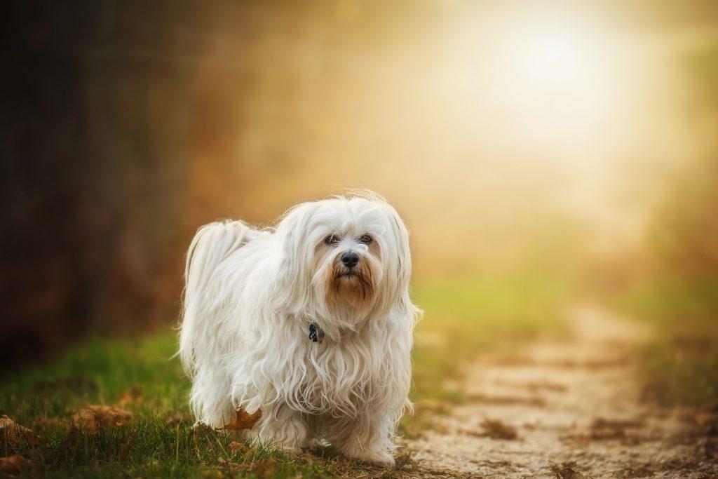 à savoir sur les poils des chiens
