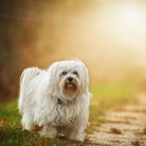 6 choses à savoir sur les poils du chien