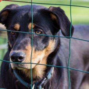 La vente de chiens d'élevages interdite dans les animaleries de Californie