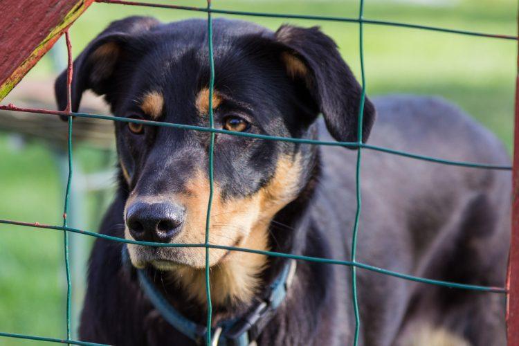 la californie interdit les animaux d'élevage