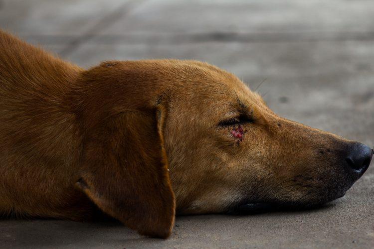 animaux blessés, que faire
