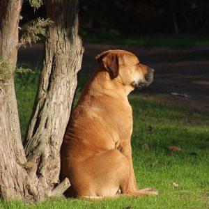 Un tribunal condamne des chiens à se faire couper les cordes vocales